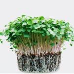 sustainability_nutrition_corporate_webinar